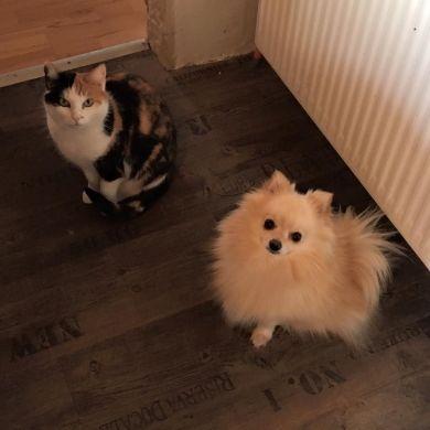 Lucy & Max, Gutlaunemacher